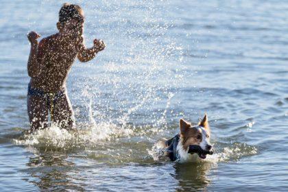 Vacanze con animali al Trasimeno 4